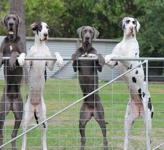 Fences Make the Best Neighbors!