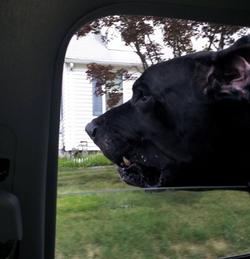 The vet documented...