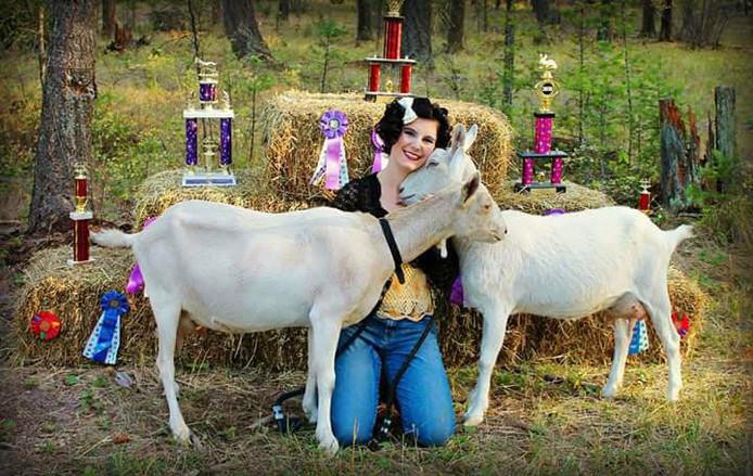 Award winning goats