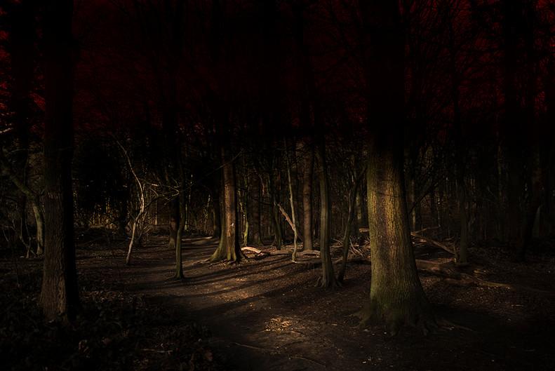 Zwischen den Wäldern