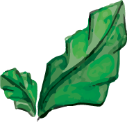 hoja 2.png