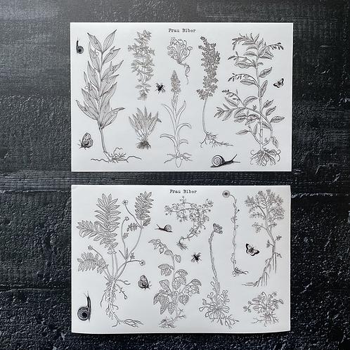 Stickerset   Sommerwiese   Insekten und Pflanzen