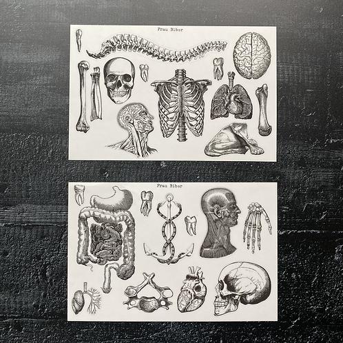 Stickerset   Anatomica   Anatomie  