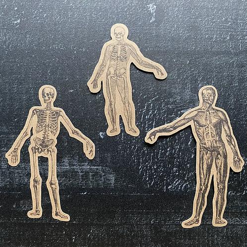 Stickerset | Stickerflakes  Kraftpapier | anatomische Typen