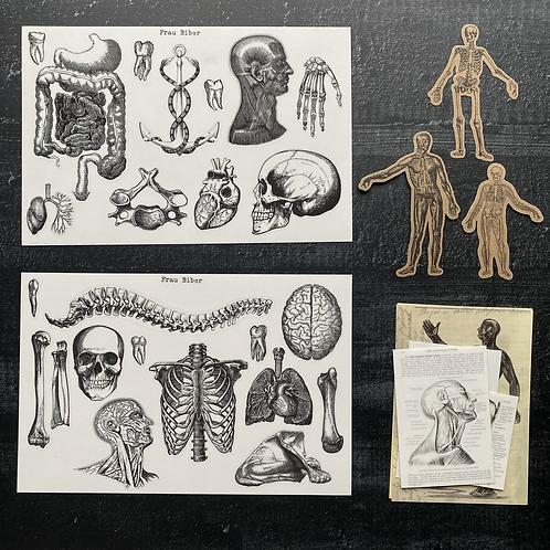 Anatomica- Set | Stickerset | Einmal von allem, bitte!