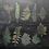 Thumbnail: Transparente Sticker Farne   Fremdgebibert   20 Stück