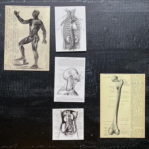 Transparente Journalingsticker   Anatomica   5 Stück