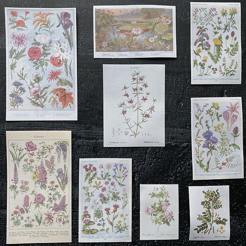 Fremdgebibert | Washisticker | bunte Blumen | 20 Stück