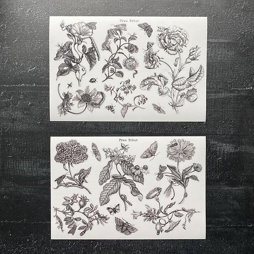 Stickerset | Pflanzen und Insekten | Sybilla Merian |