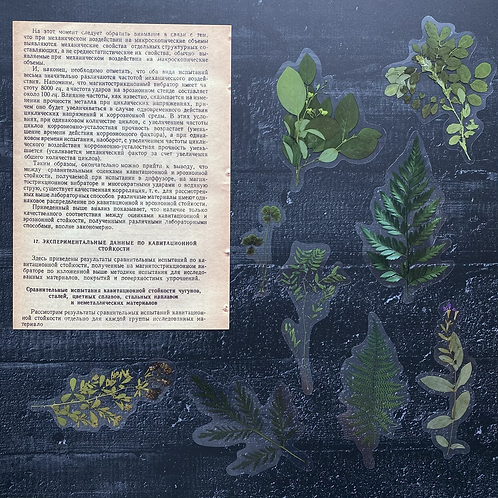 Fremdgebibert | grüne Pflanzen