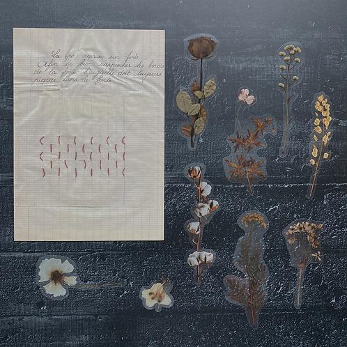 Fremdgebibert  Trockenblumen