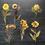 Thumbnail: Fremdgebibert | große Aufkleber | gelbe Blumen | 6 Stück