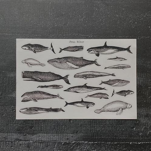 Stickersheet | Wale | Rettet die Wale