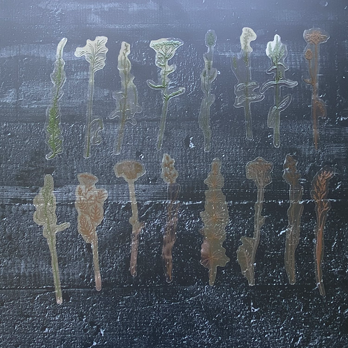 Fremdgebibert | Gräser | 30 Stück
