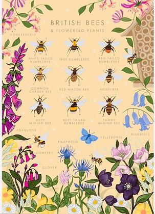 'British Bees' Greeting Card
