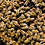 Thumbnail: BBKA & Bear Cool Save the Bees Campaign