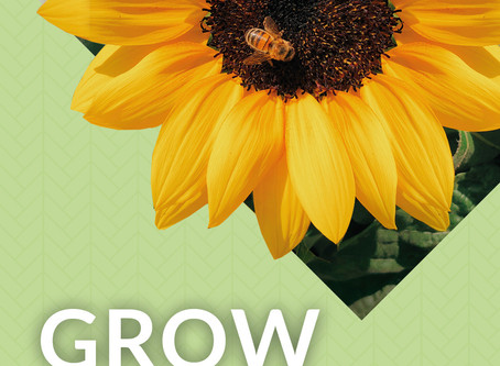 Grow Your Own Ray Of Sunshine