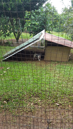 Current fence, not big enough