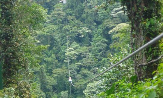 Zip Line - Canopy