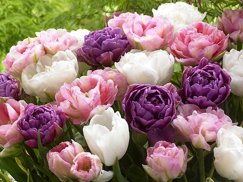 Tulip Wedding Collection Mix