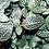 Thumbnail: Nerve Plant
