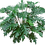 Thumbnail: Philodendron - assorted