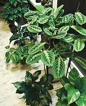 photo-of-potted-houseplants-2894950.jpg