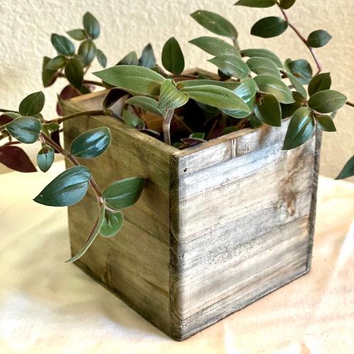 Dark Wood Pot