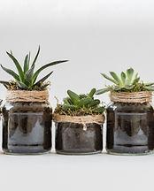 five-succulent-plants-1906439.jpg
