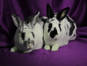 Darcie & Hector