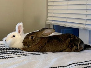 Millie Maus & Sonny