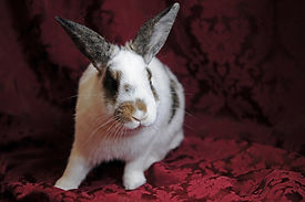 Vinny the rabbit