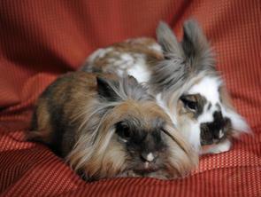Lexi & Titus