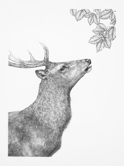 Stag with Beech- original