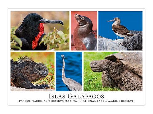 Ecuador - Islas Galápagos