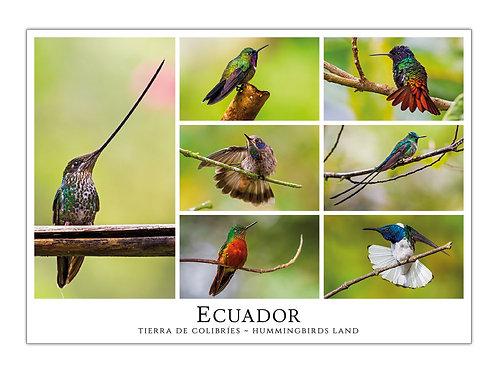 Ecuador - Tierra de Colibríes II