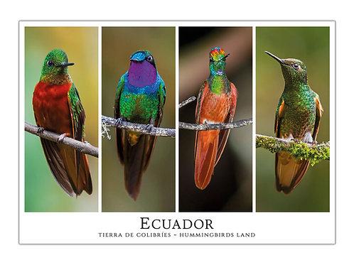 Ecuador - Tierra de Colibríes I