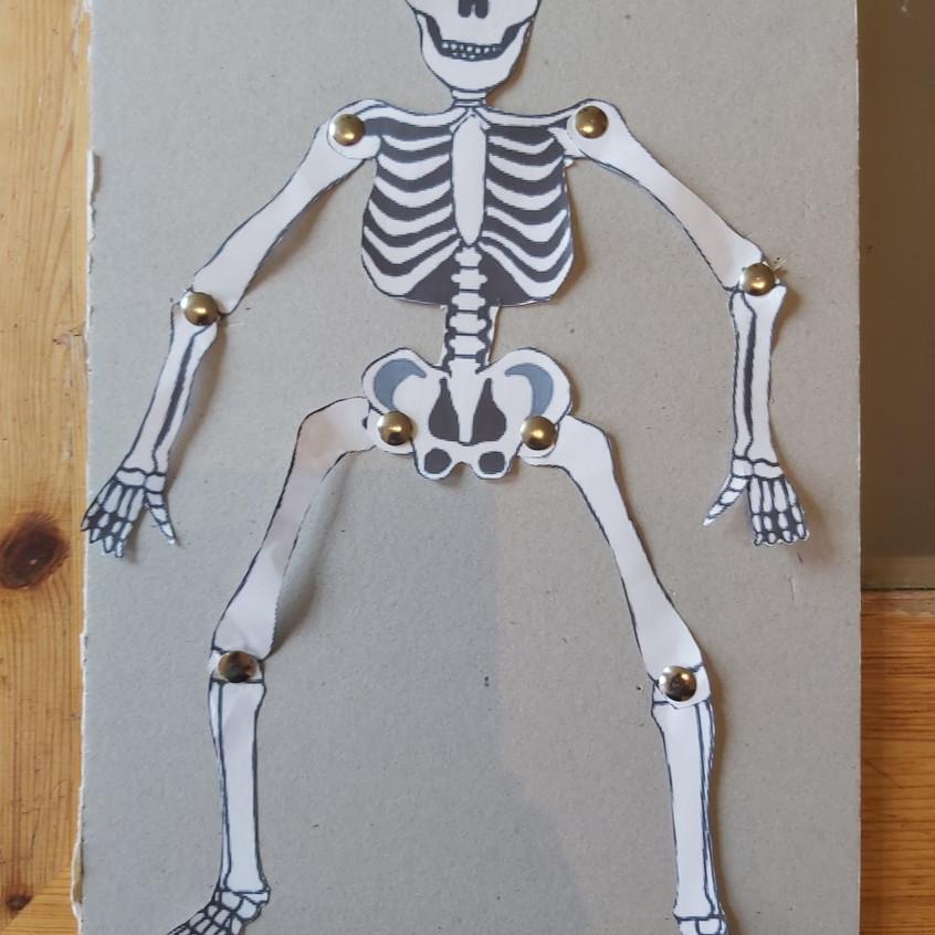 David's skeleton