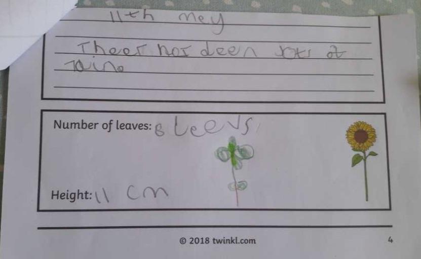 Isla's sunflower diary_edited