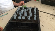 Week 1 Rocket Seeds from Space