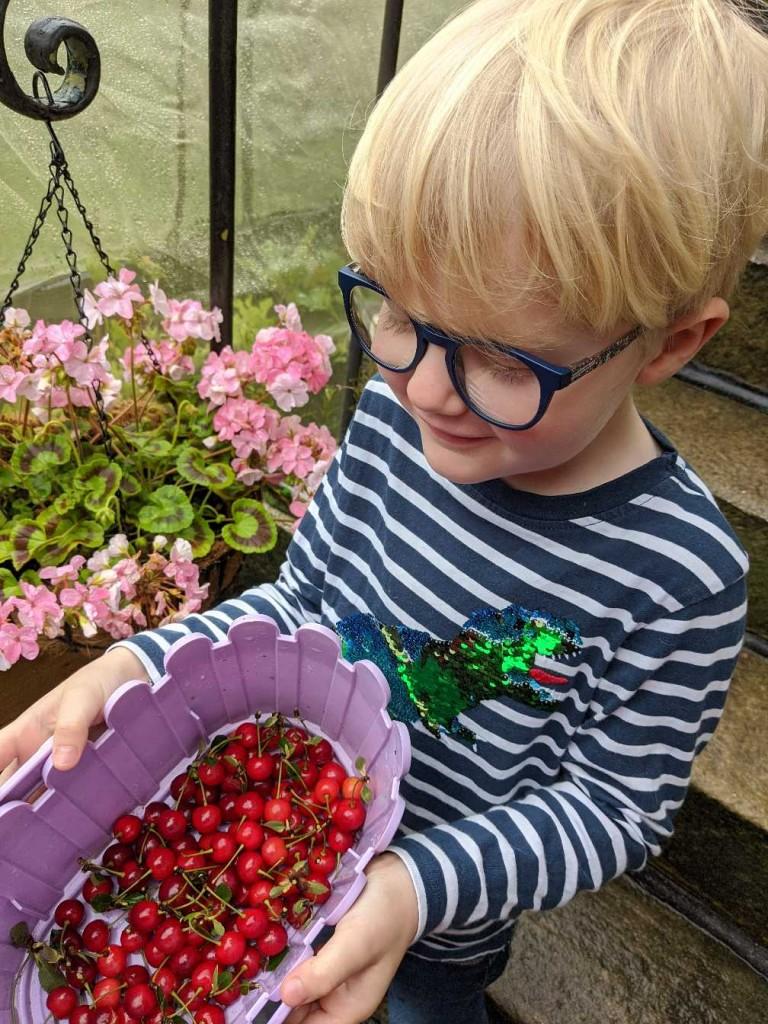 Ted's cherry harvest