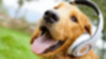 dog with headphones.png