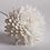 Thumbnail: Flower Reeds