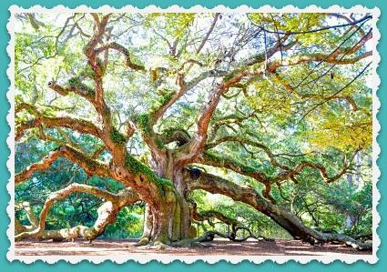 Angel Oak ~ Limbs of Love