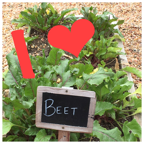You Can't Beat Beets
