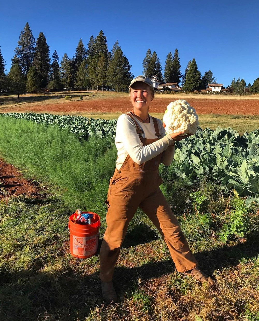 Kaye found a 10 lb cauliflower!