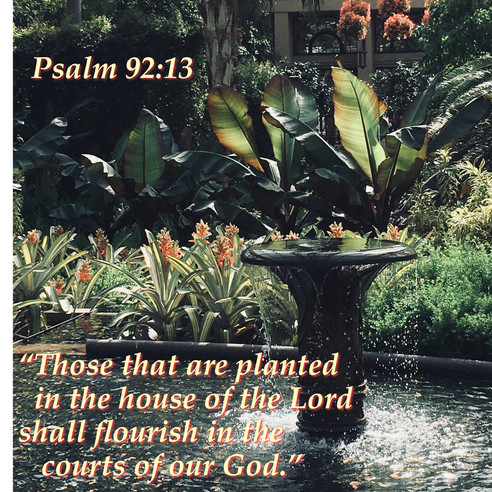Plan to Flourish