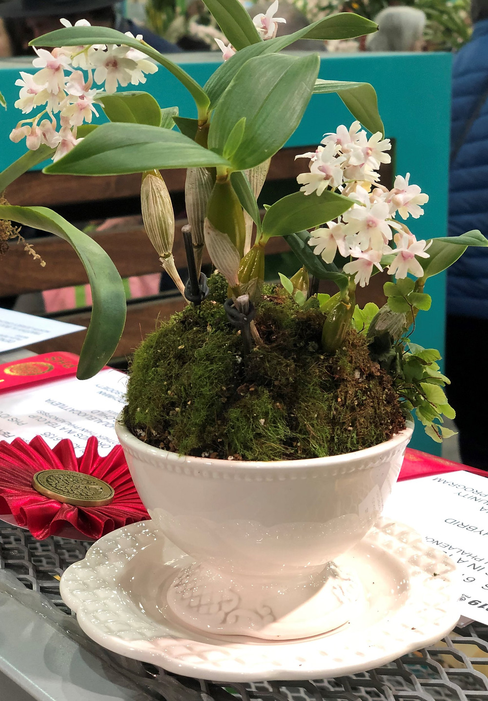 Tea Cup Orchid (notice the second place ribbon)