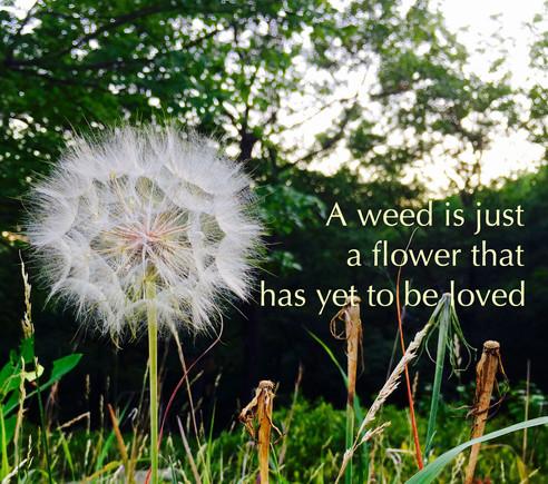 Got Weeds?