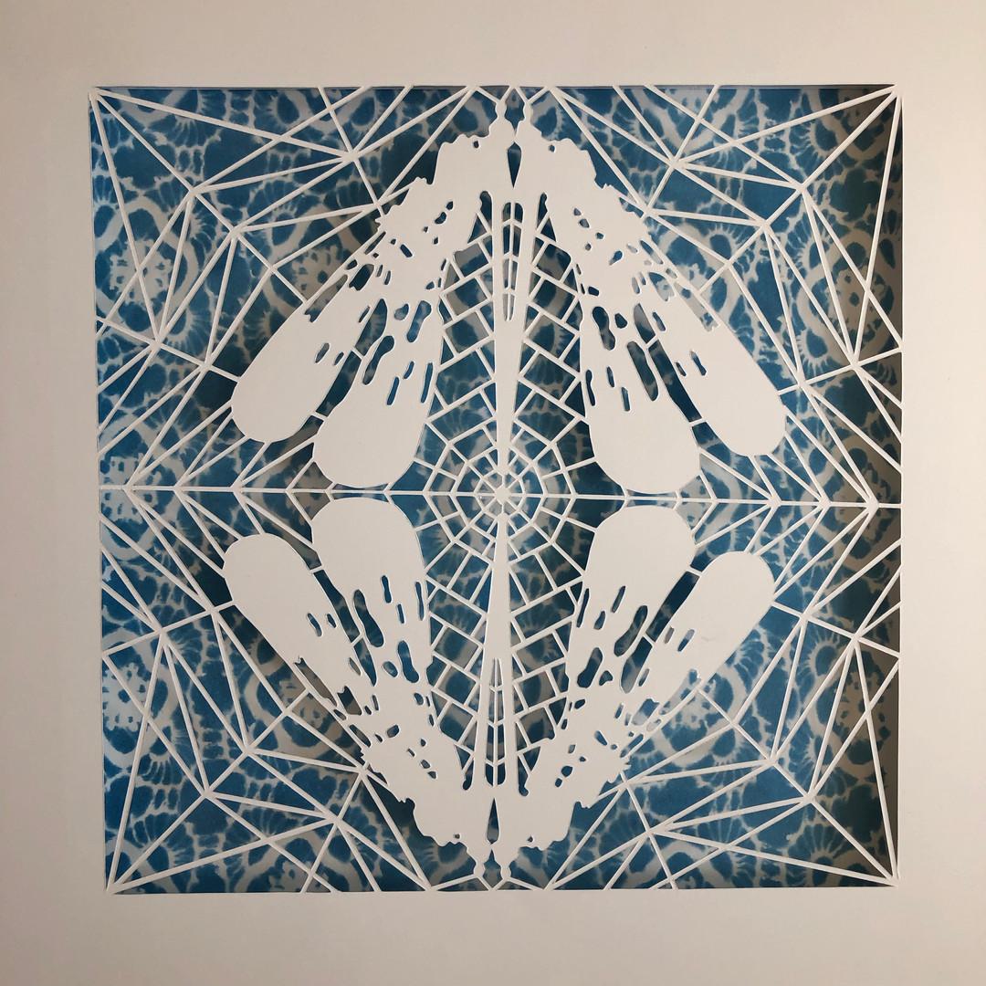 cyano+ #5